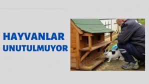 SOKAK HAYVANLARINA MAMA DESTEĞİ