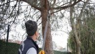 Tuzla'da Toplanan Atık Dallar İle 5 Bin Ailenin 24 Saatlik Elektriği Üretiliyor