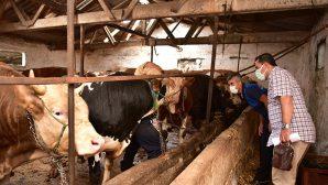 Tuzla'da Kurbanlık Satış Ve Kesim Noktalarına Sıkı Denetim